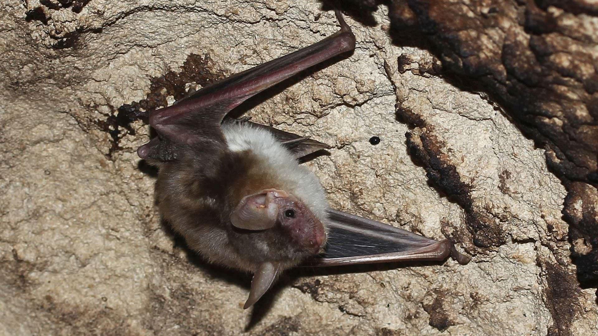 climbats-bat1