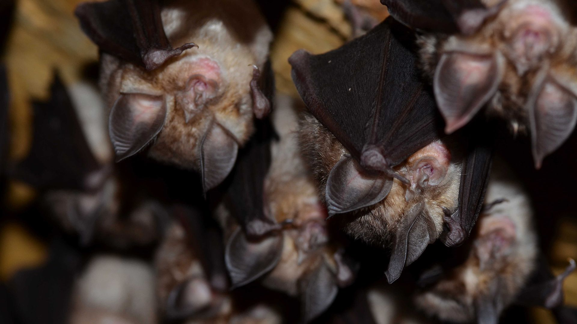 climbats-bats-compressor